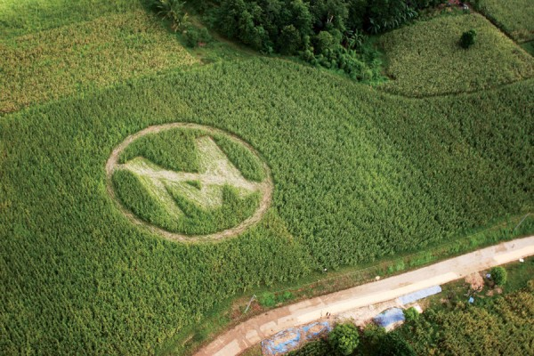 GMO Foods Health Risks