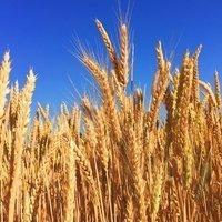 7 Ways to Avoid GMO-Food Health Risk