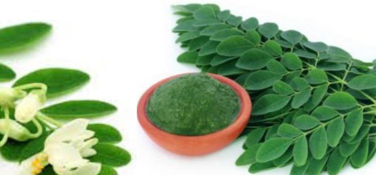 Moringa miracle plant